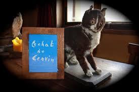gatto2.jpg